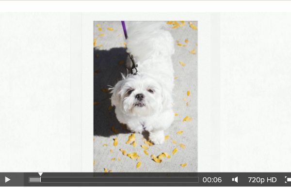 Minnetonka Pet Photography Video Blog NorthStar Shih Tzu Rescue Dogs