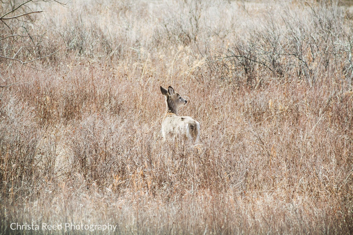 Deer at Theodore Roosevelt National Park in North Dakota.