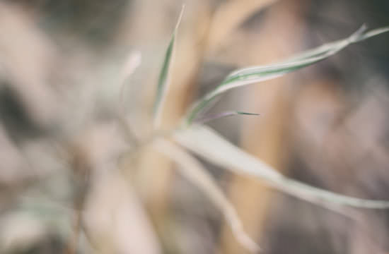 close up picture with blades of grass