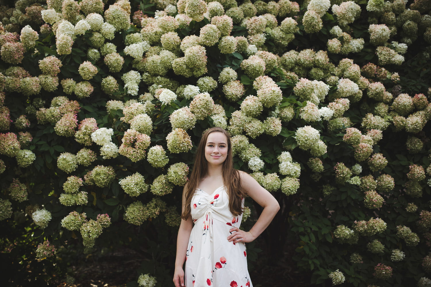 New Prague Senior pictures with hydrangeas