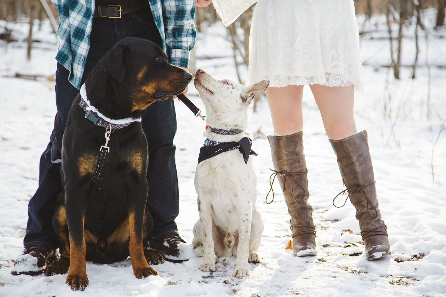 cute picture of dogs in the snow at lake maria